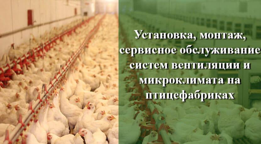 баннер-птицефабрика